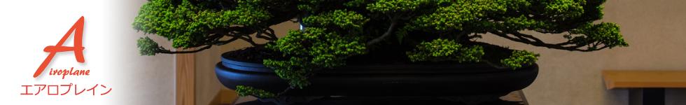 写真とレビューのブログ「エアロプレイン」