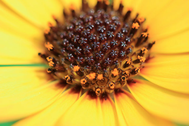 Thumbnail of post image 052