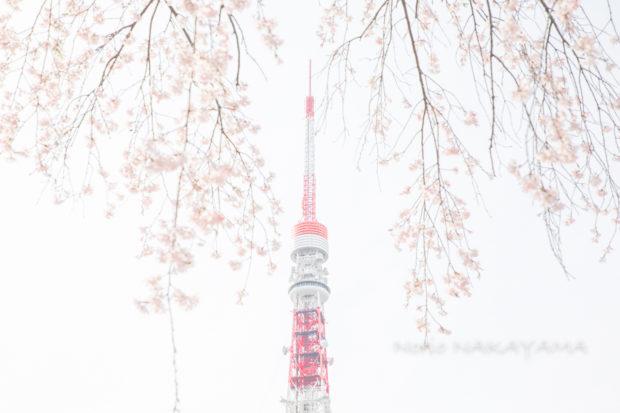I LIKE TOKYO TOWER 東京タワーが好きだ